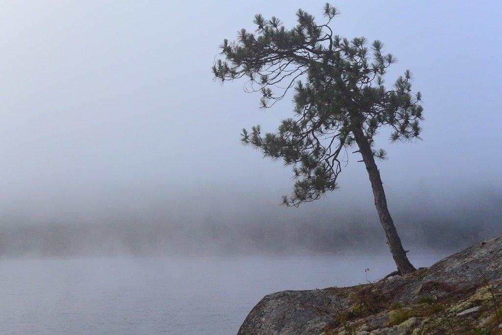 Tree, Diamond Lake, enshrouded in fog